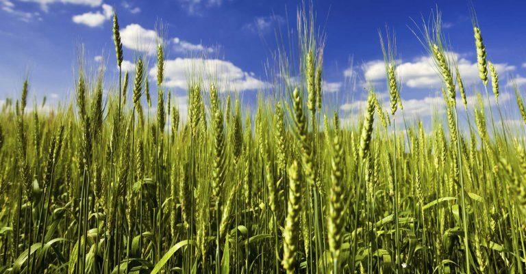 بیمه محصولات کشاورزی
